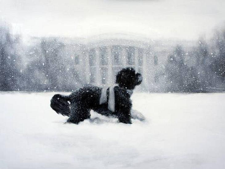 Ho Ho Ho - Stars im WeihnachtsfieberEr ist der wahre Star im Weißen Haus - First Dog Bo. Hier wurde er von Künstlerin Larassa Kabel verewigt. Schnuffig!