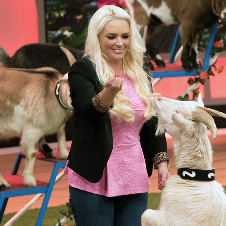 """Oberaffengeil"": Neue RTL II-Show floppt total"