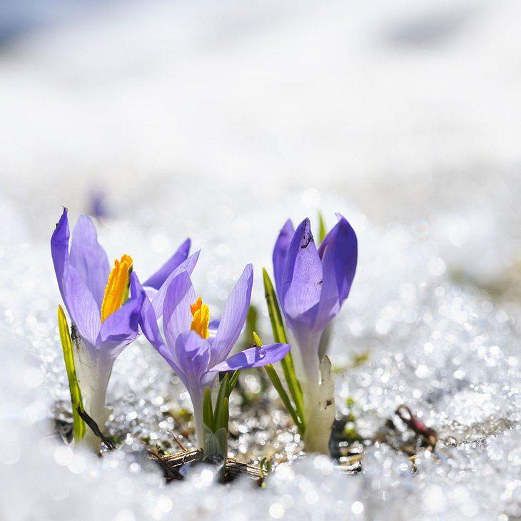 Polar-Winter an den Feiertagen: Gibt es weiße Ostern?