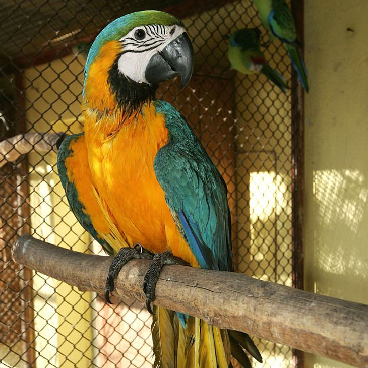 Papagei-Symbolbild