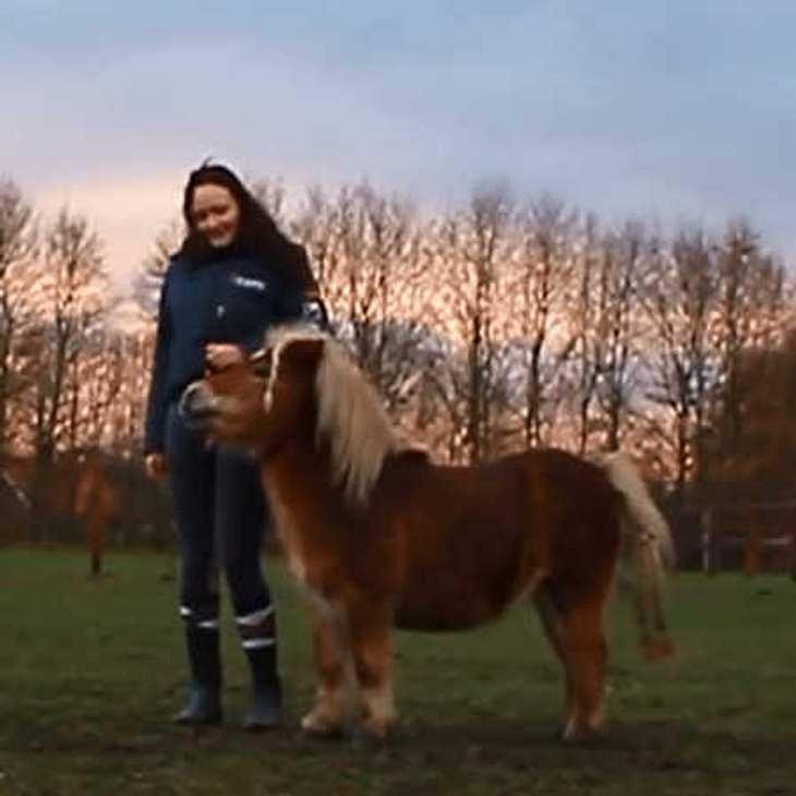 Dieses Pferd ist außer Rand und Band!