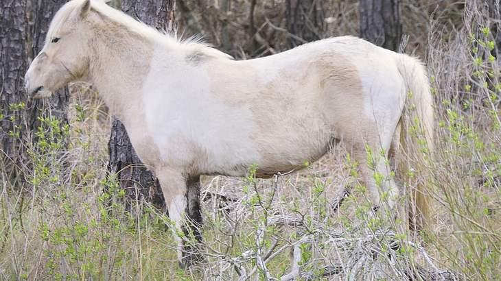 Pony nach sexuellem Missbrauch getötet!