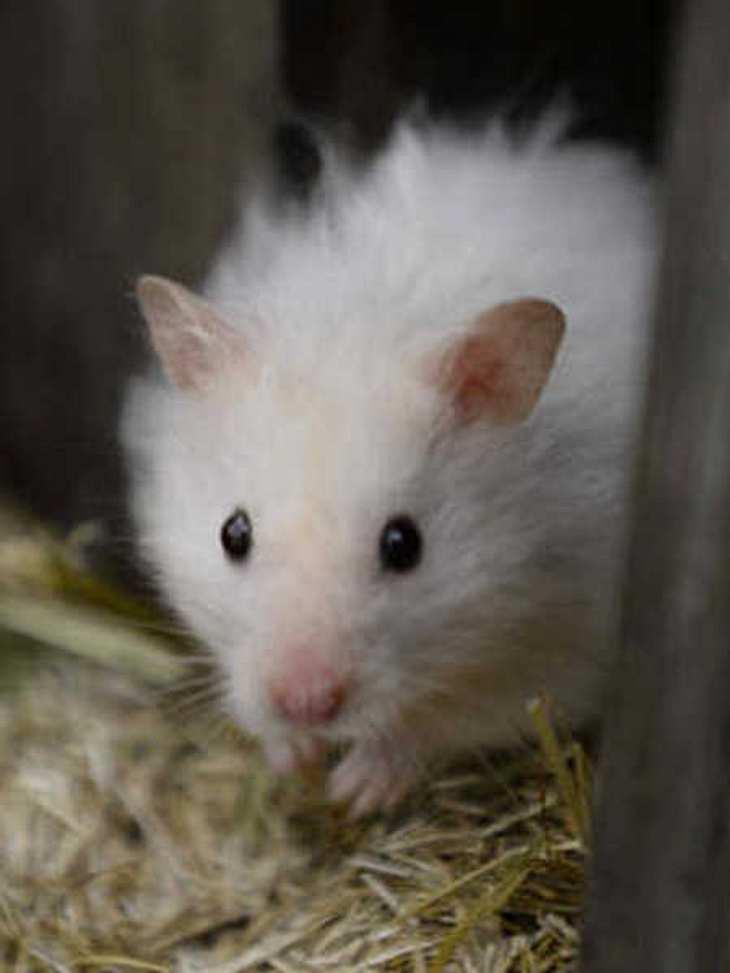 "Muss/darf der ""Promi Big Brother""-Hamster das Haus bald verlassen?"