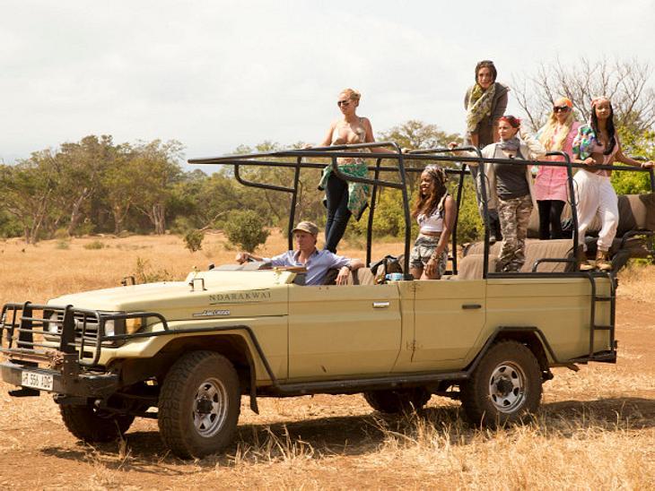 """Sogar die """"Wild Girls"""" hatten mehr Zuschauer als """"Reality Queens auf Safari""""."""