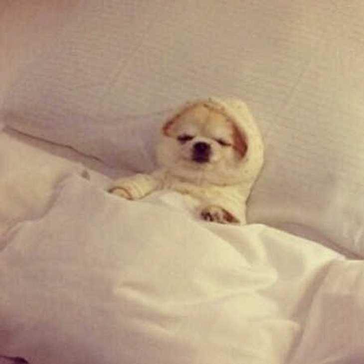 Reese Witherspoon zeigt ihren megasüßen Hund!