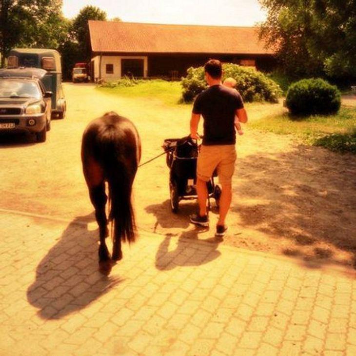 Rocco Stark: Ein Pony für Amelia