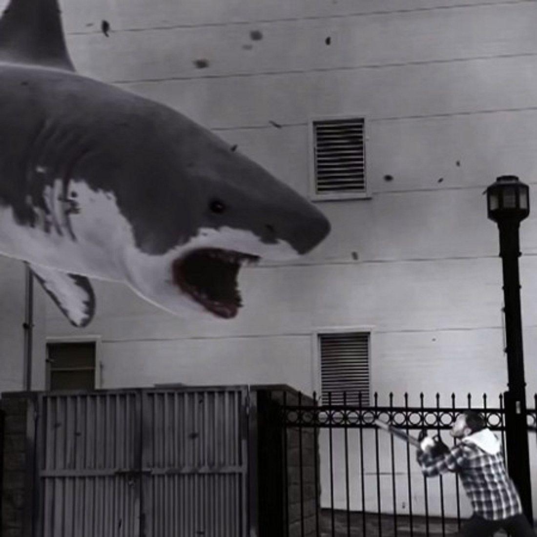 Vorsicht Hai!