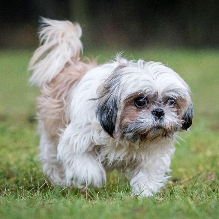 Thüringen: Hund gewaltsam ermordet!