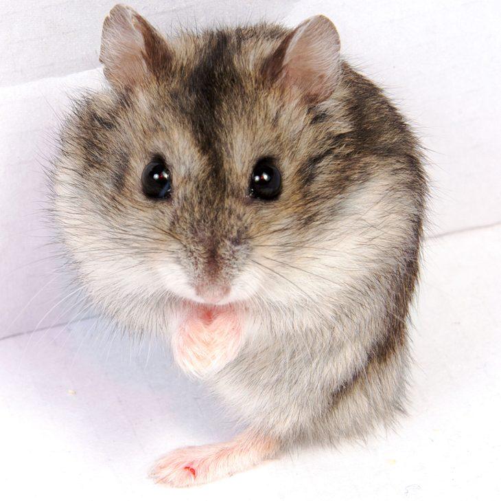 studentin sp lt ihren hamster im klo runter weil er nicht ins. Black Bedroom Furniture Sets. Home Design Ideas