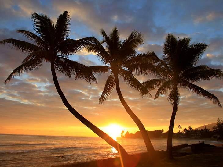 ,Urlaubsziele der StarsWenn wir an Traumurlaub denken, kommen uns Palmen, eine untergehende Sonne und eine Brise Aloha in den Sinn. Genau, willkommen auf Hawaii. Den Hotspot für Surfing, Hula-Tänze, Pina Colada und Bilderbuch-Stränden finde