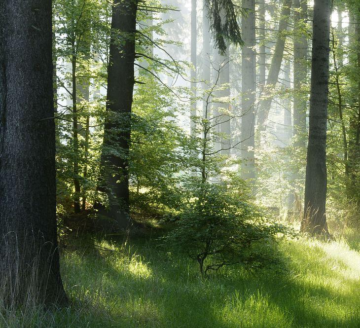 Baby tot im Wald gefunden (Symbolbild)