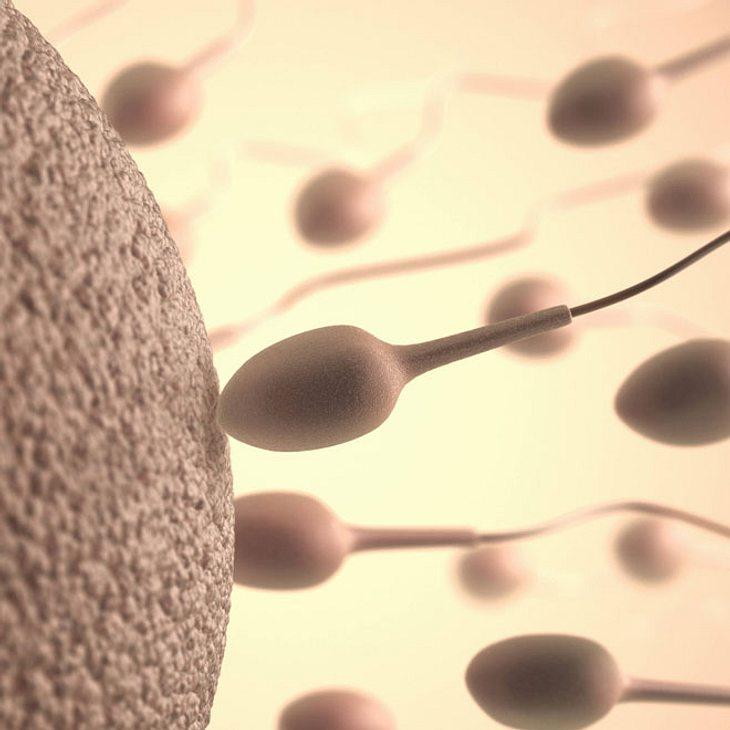 Ekel-Alarm: Youtuberin Tracy Kiss pflegt ihre Haut mit Sperma!